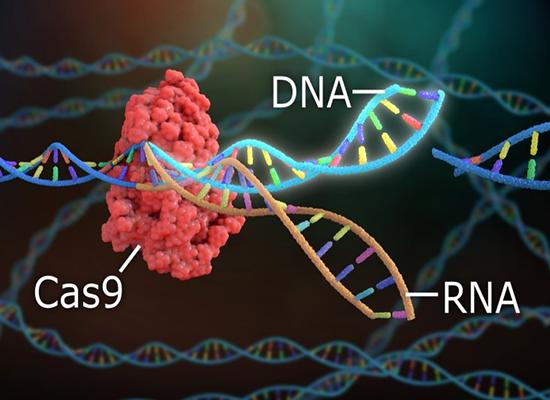 CRISPR/Cas9 genome editing
